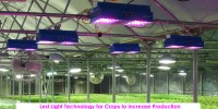 LED_Lights_Technology to increase production-Hydroponic Greenhouse- ITC Ltd