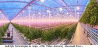 Led Light Solution Hydropomnic Greenhouse ITC Ltd