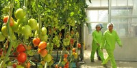 Sterile Hydroponic Greenhouse ITC Ltd