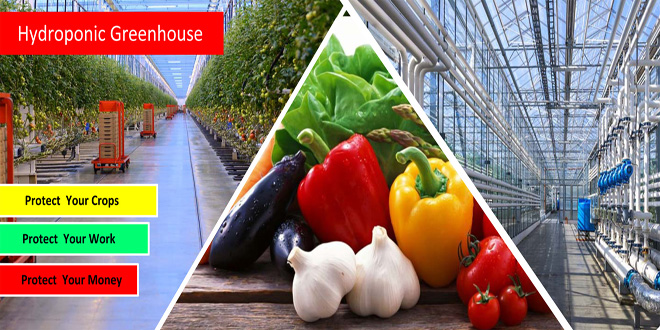 Hydroponic Greenhouse Protect Your Crops  ITC Ltd