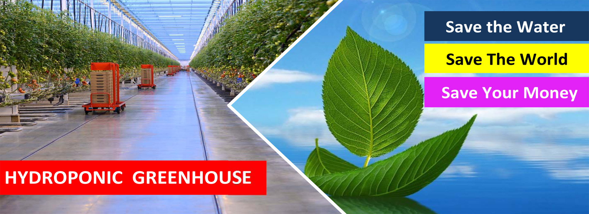 Hydroponic Greenhouse Save Water  Save the World  ITC Ltd