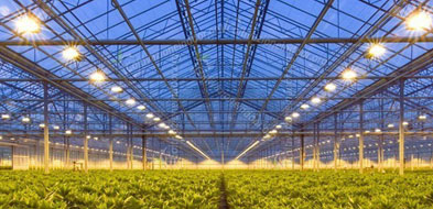 greenhouse led lights pic