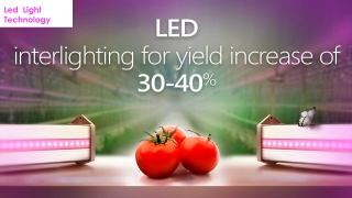 Led Light for Hydropoponic Crops in Greenhouse