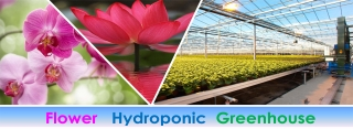 Floricolture Hydroponic Greenhouse